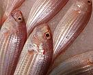 Golden threadfin bream: cheap in the past, but now we're paying the price