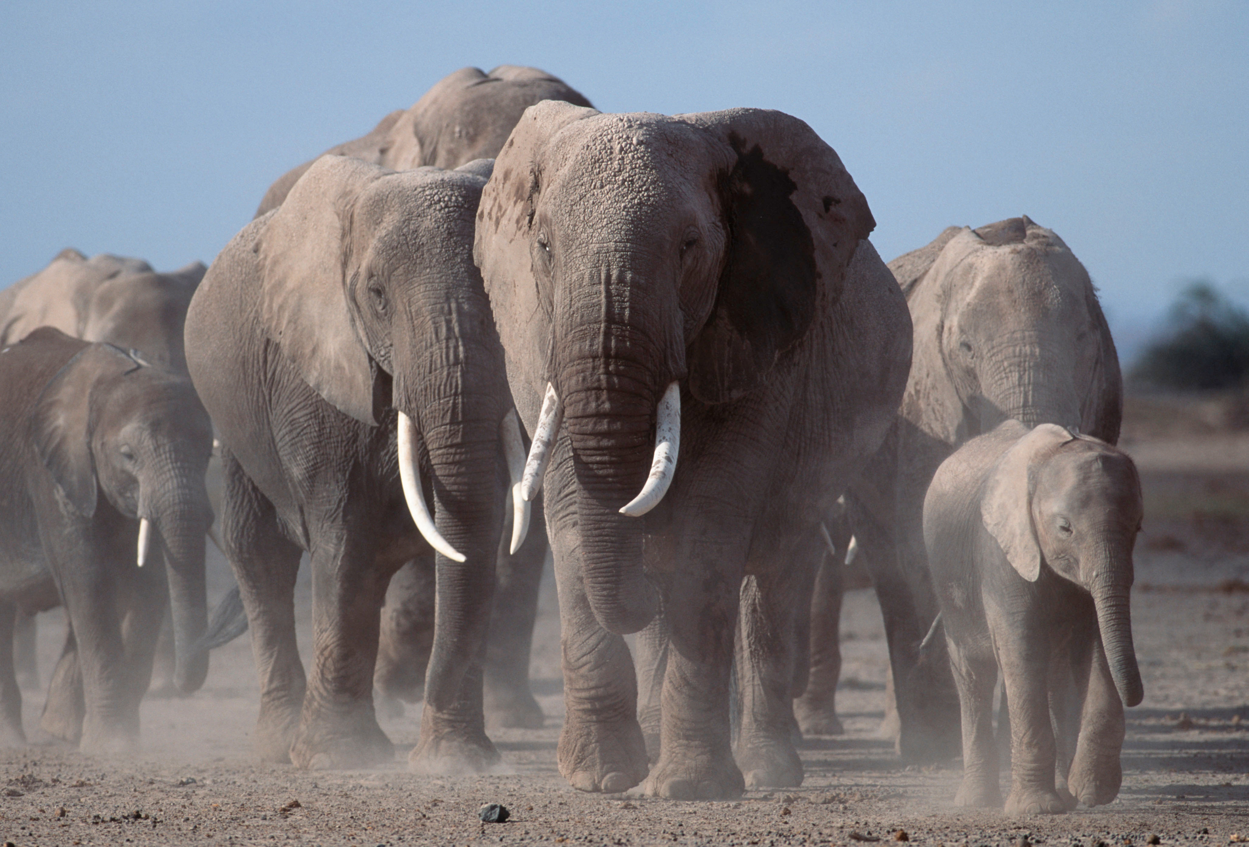 ecd09148e Hong Kong ivory ban is now law WWF says it s time to close all Asian ...