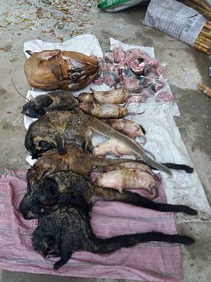 Poached wild animals for sale in Laos.
